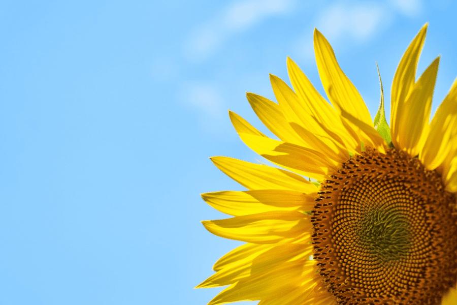 Vitamin D - Sonnenscheinhormon