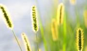 Hilfe gegen Allergien Heuschnupfen